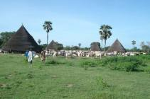 High huts at a cattle camp centre in South Sudan